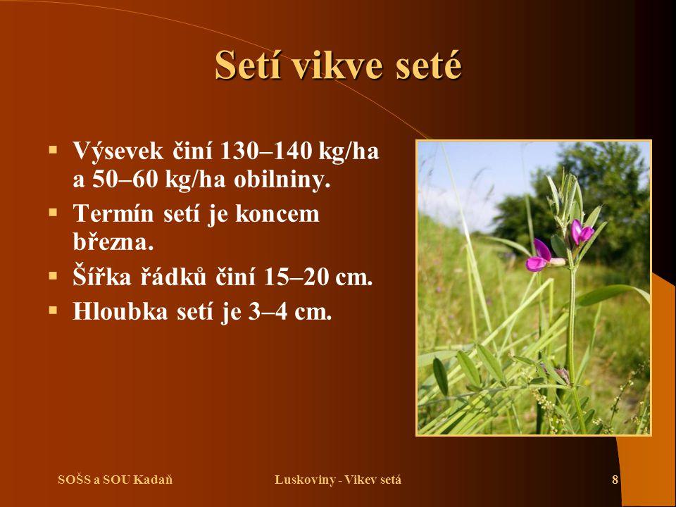 Setí vikve seté Výsevek činí 130–140 kg/ha a 50–60 kg/ha obilniny.