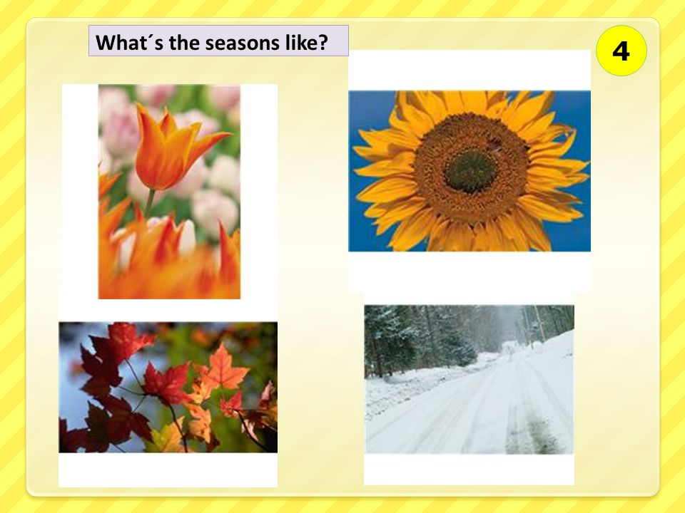 What´s the seasons like