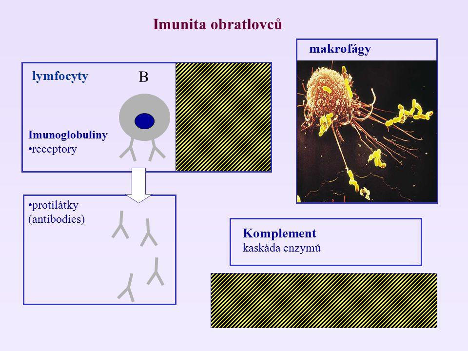 Imunita obratlovců T B makrofágy lymfocyty Komplement MHC