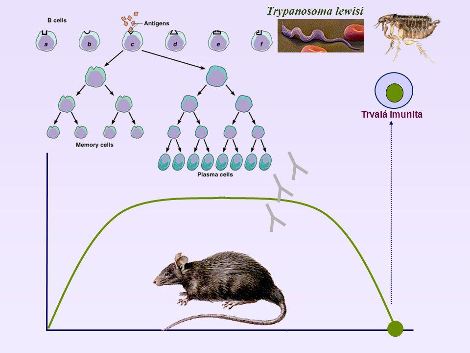 Trypanosoma lewisi Trvalá imunita