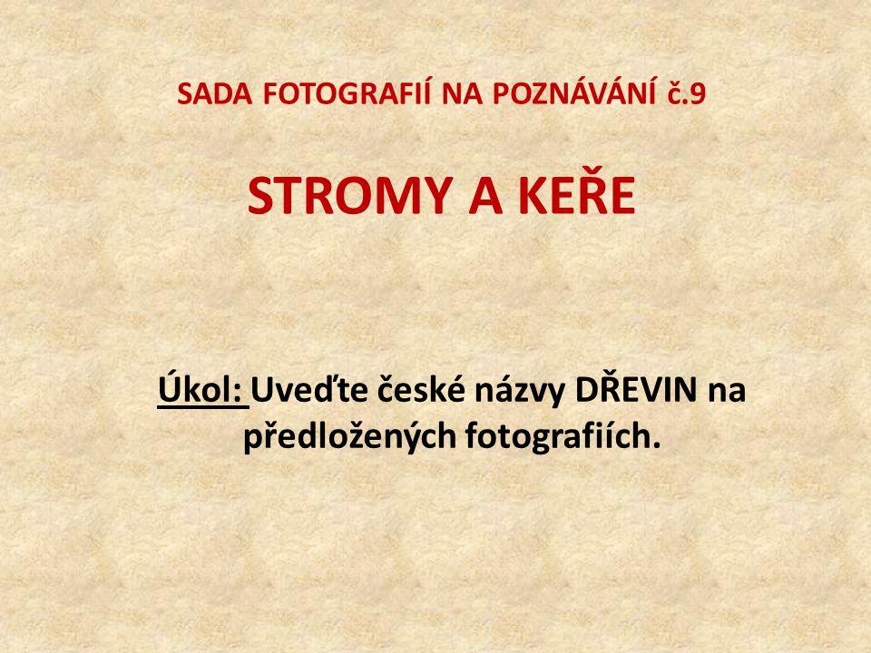SADA FOTOGRAFIÍ NA POZNÁVÁNÍ č.9 STROMY A KEŘE