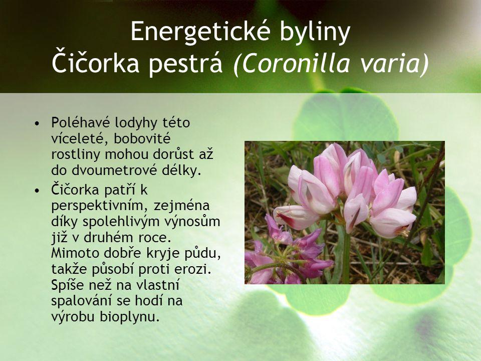 Energetické byliny Čičorka pestrá (Coronilla varia)