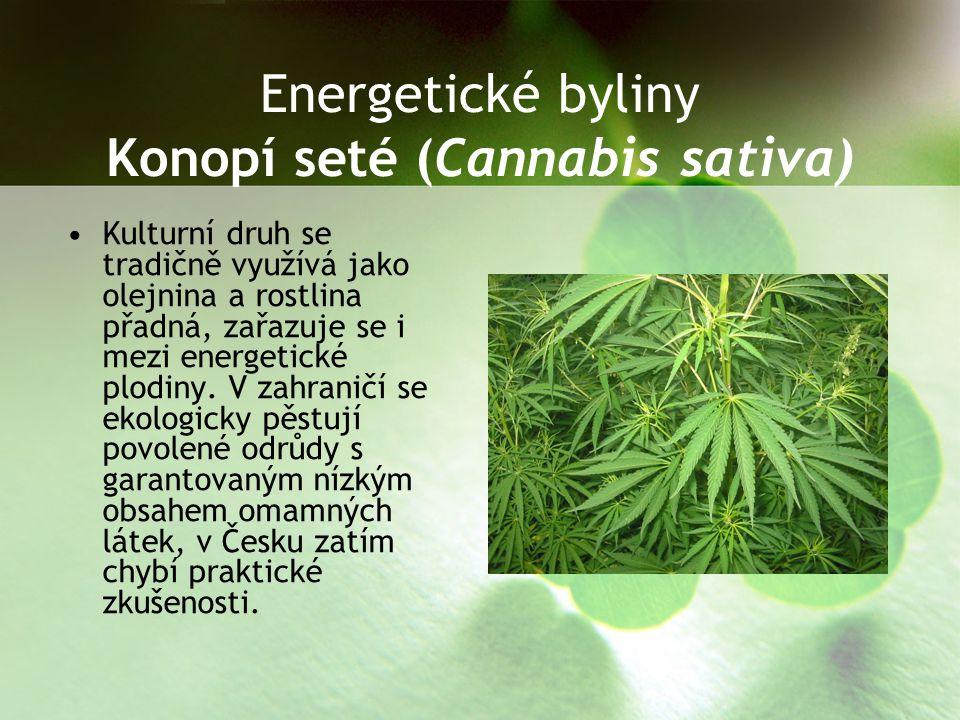 Energetické byliny Konopí seté (Cannabis sativa)