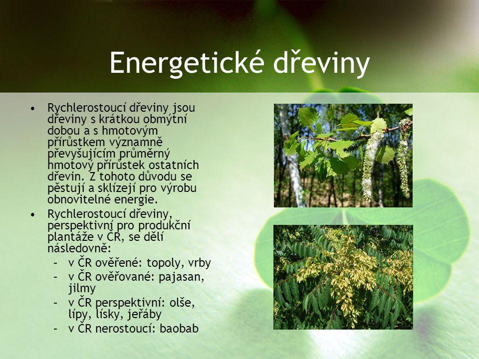 Energetické dřeviny