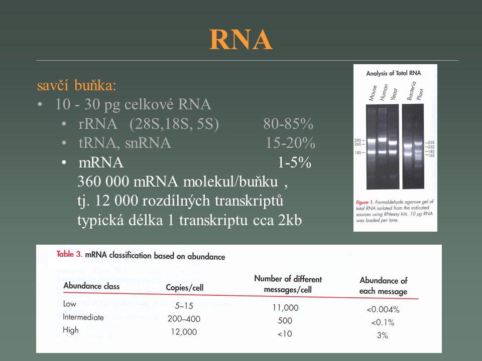 RNA savčí buňka: 10 - 30 pg celkové RNA rRNA (28S,18S, 5S) 80-85%
