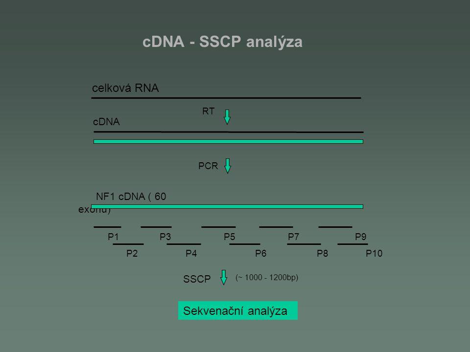 cDNA - SSCP analýza celková RNA cDNA NF1 cDNA ( 60 exonů)