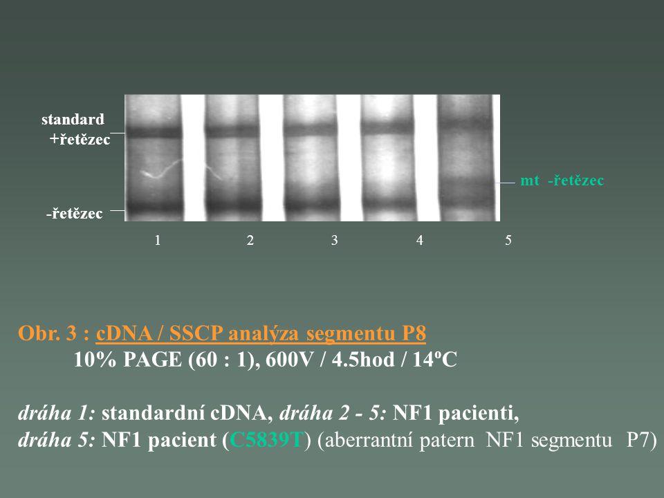 Obr. 3 : cDNA / SSCP analýza segmentu P8