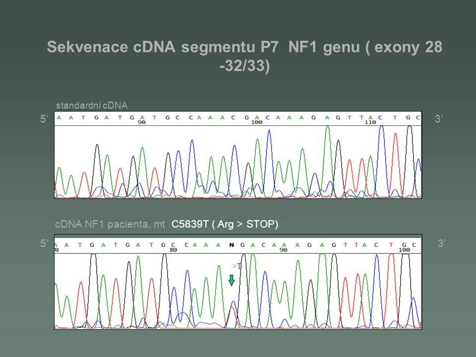 Sekvenace cDNA segmentu P7 NF1 genu ( exony 28 -32/33)