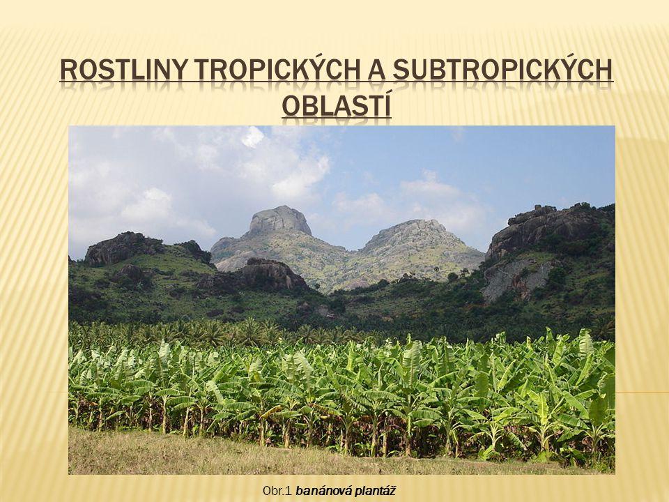 Rostliny tropických a subtropických oblastí