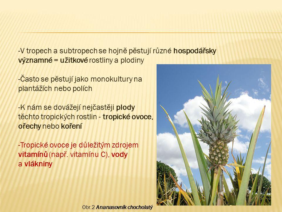 Často se pěstují jako monokultury na plantážích nebo polích
