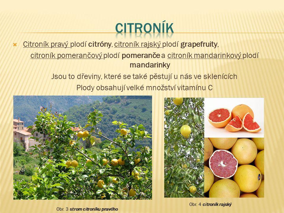 Citroník Citroník pravý plodí citróny, citroník rajský plodí grapefruity,