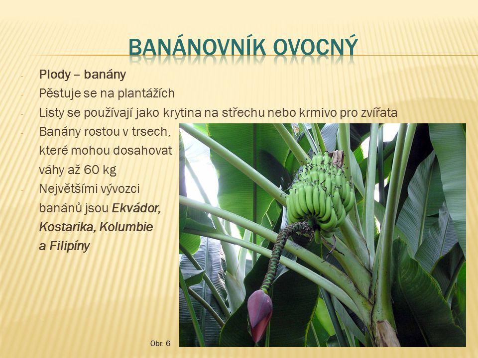 Banánovník ovocný Plody – banány Pěstuje se na plantážích