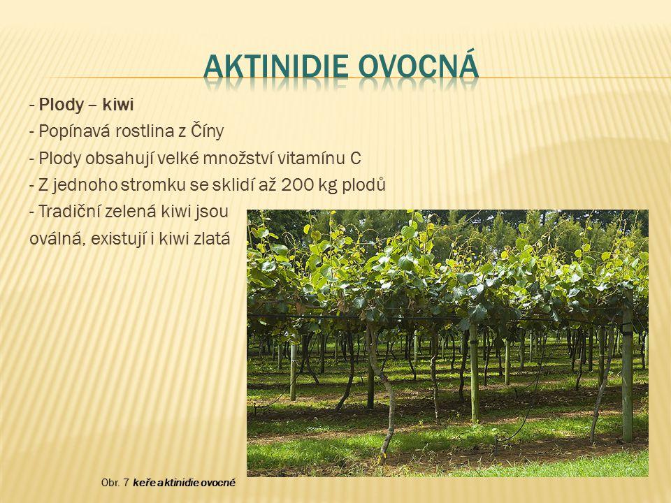 Aktinidie ovocná