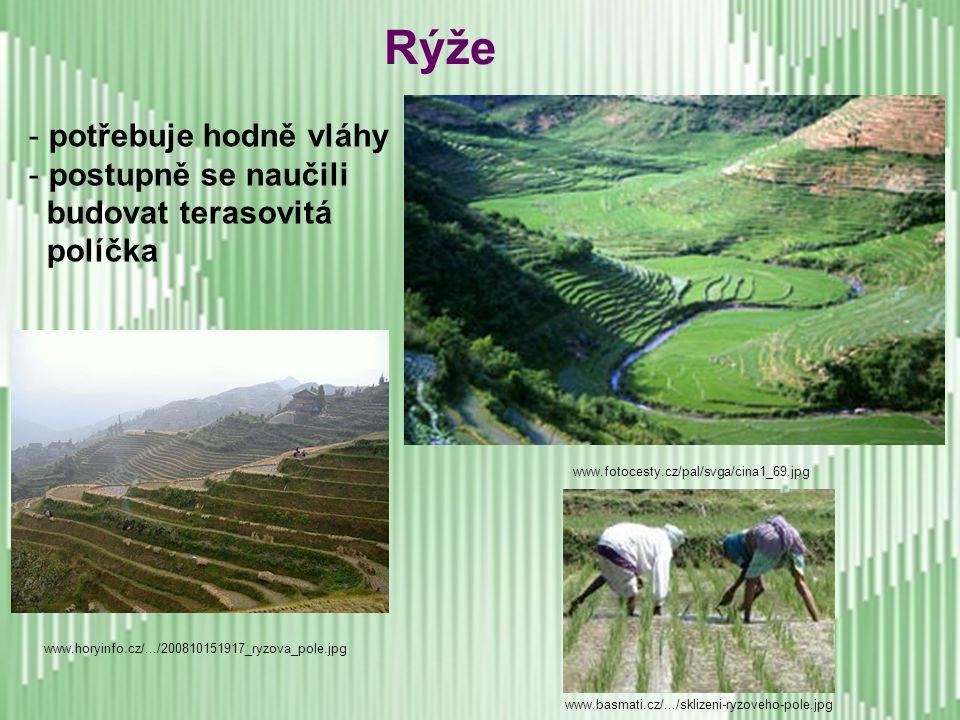Rýže potřebuje hodně vláhy postupně se naučili budovat terasovitá