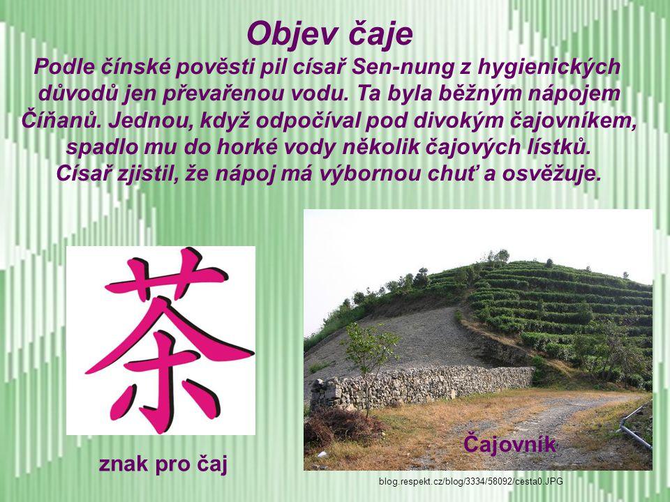 Objev čaje Podle čínské pověsti pil císař Sen-nung z hygienických