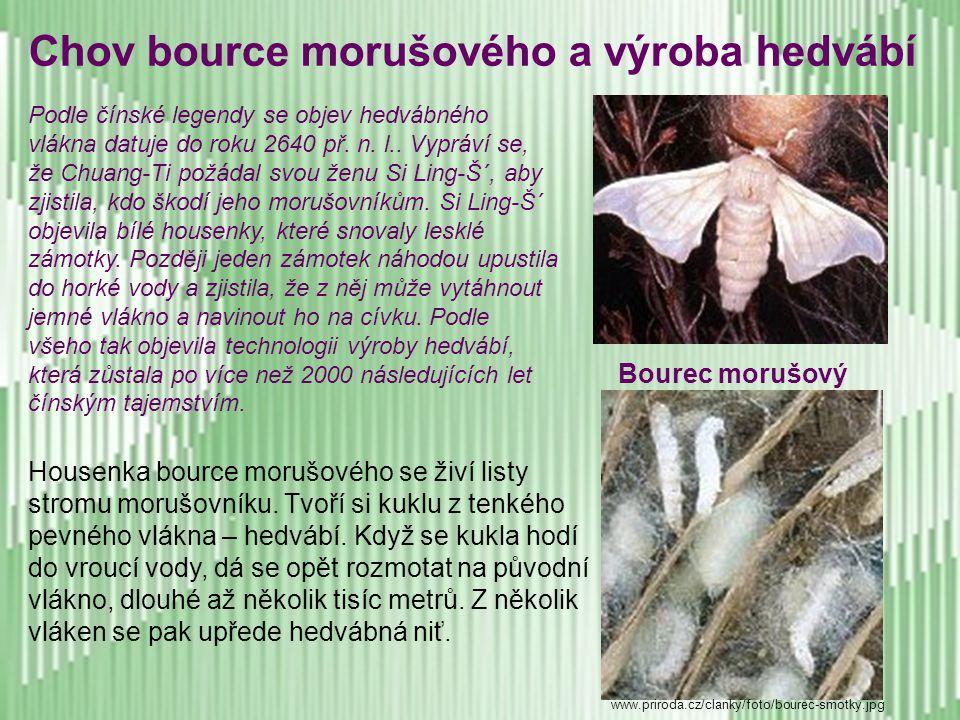 Chov bource morušového a výroba hedvábí