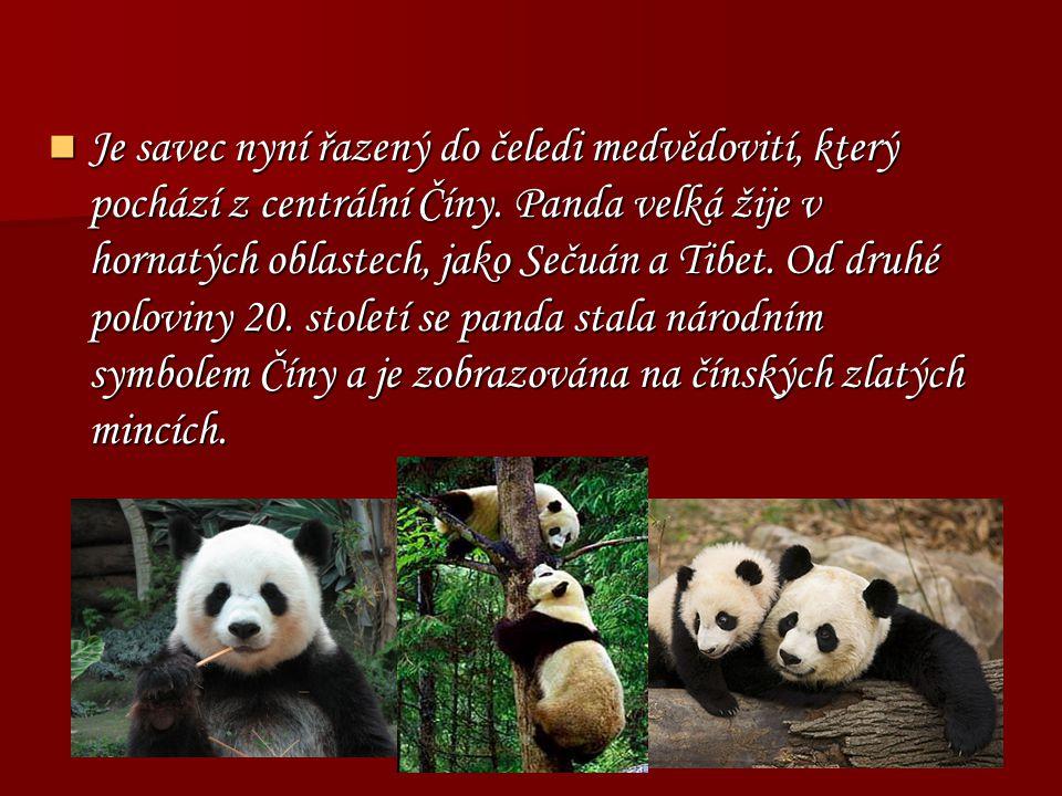 Je savec nyní řazený do čeledi medvědovití, který pochází z centrální Číny.