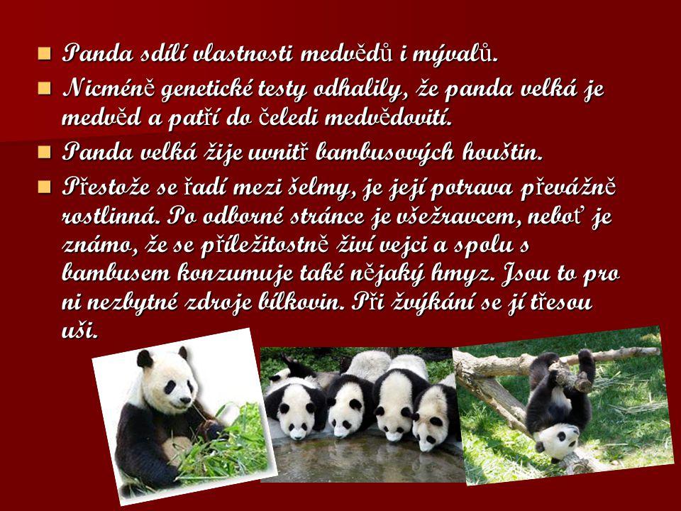 Panda sdílí vlastnosti medvědů i mývalů.