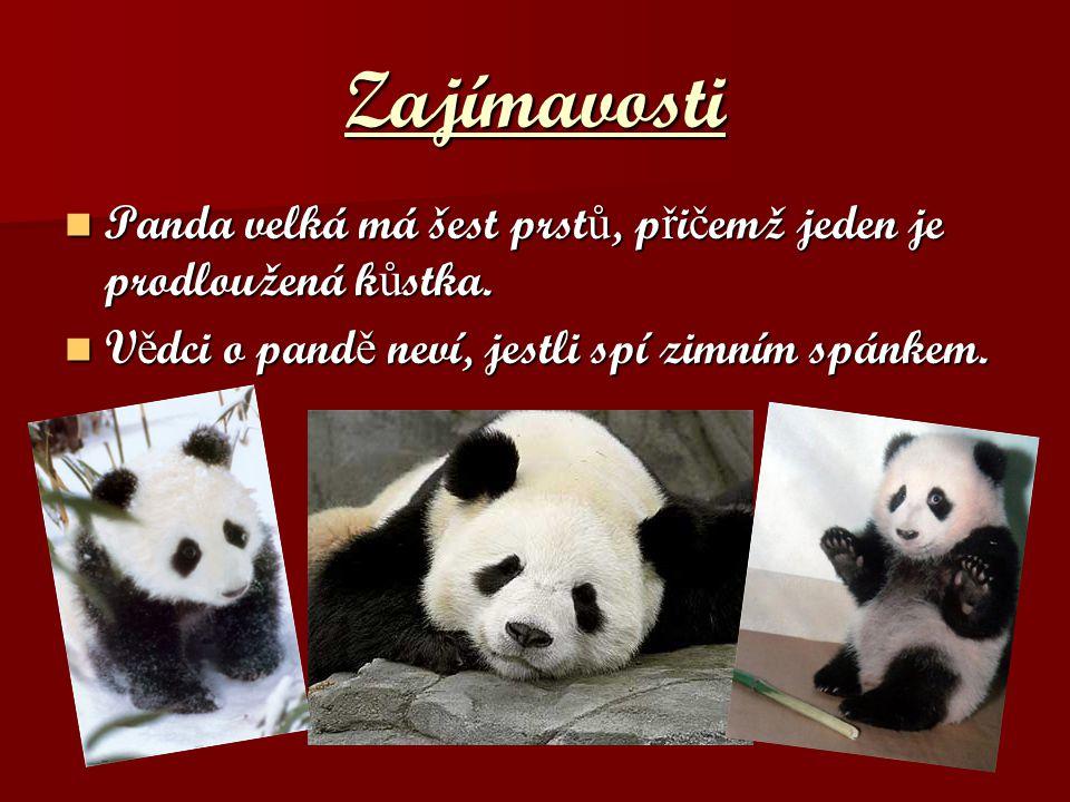 Zajímavosti Panda velká má šest prstů, přičemž jeden je prodloužená kůstka.