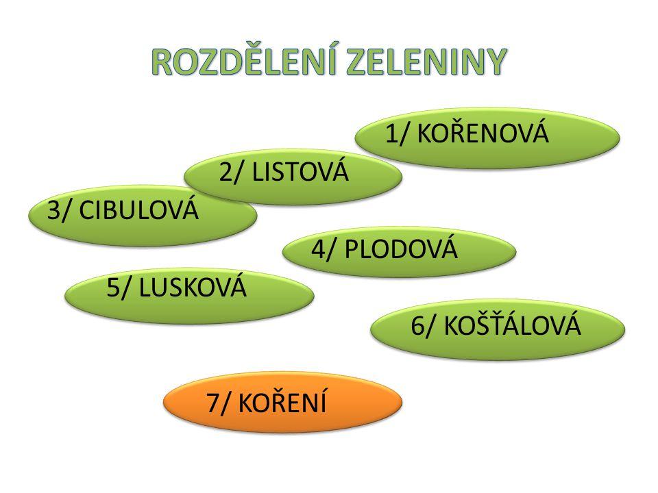ROZDĚLENÍ ZELENINY 1/ KOŘENOVÁ 2/ LISTOVÁ 3/ CIBULOVÁ 4/ PLODOVÁ