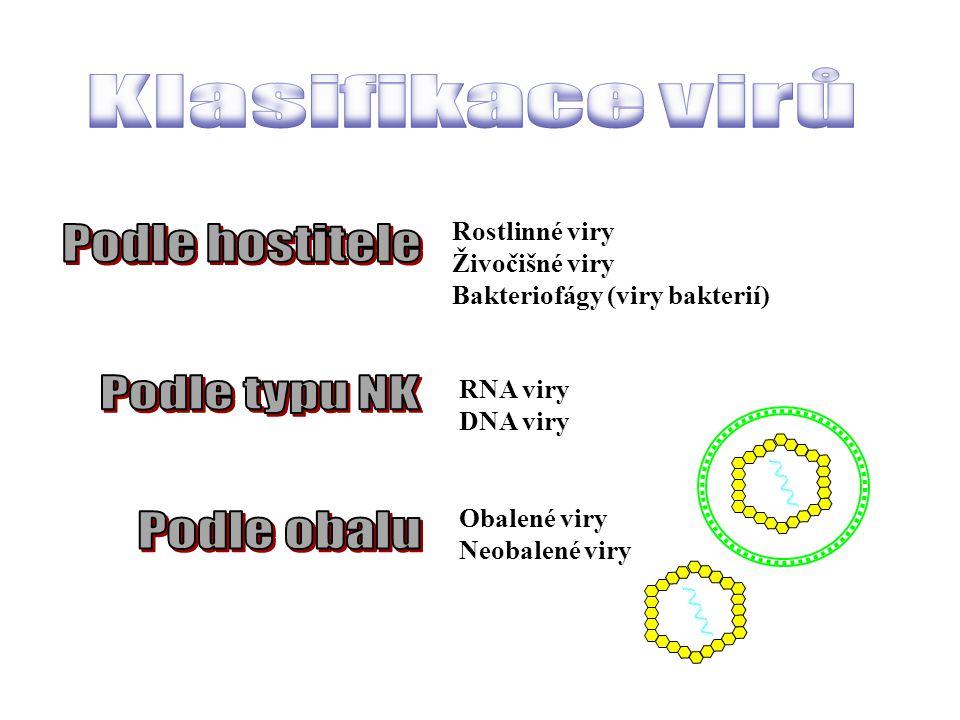 Klasifikace virů Podle hostitele Podle typu NK Podle obalu