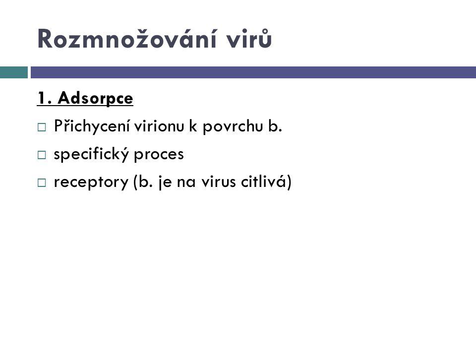 Rozmnožování virů 1. Adsorpce Přichycení virionu k povrchu b.