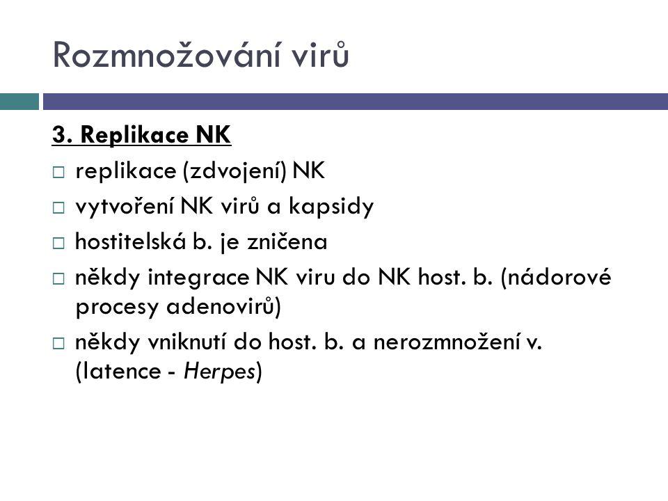 Rozmnožování virů 3. Replikace NK replikace (zdvojení) NK