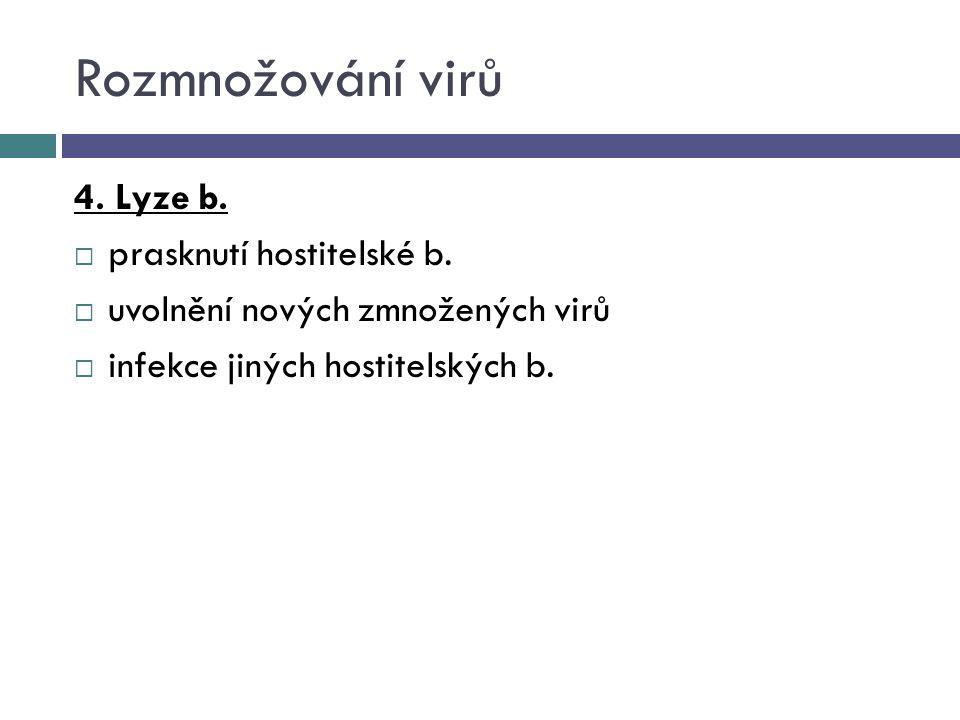 Rozmnožování virů 4. Lyze b. prasknutí hostitelské b.