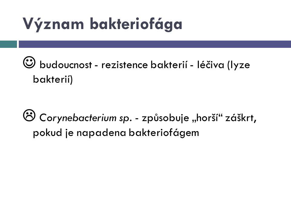 Význam bakteriofága  budoucnost - rezistence bakterií - léčiva (lyze bakterií)