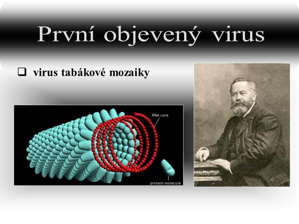 První objevený virus virus tabákové mozaiky