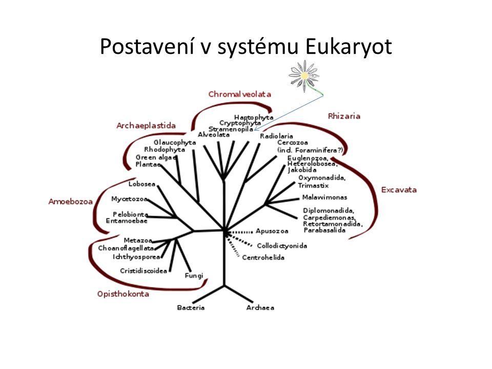 Postavení v systému Eukaryot