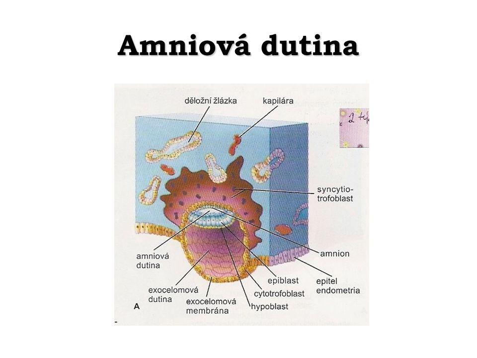 Amniová dutina