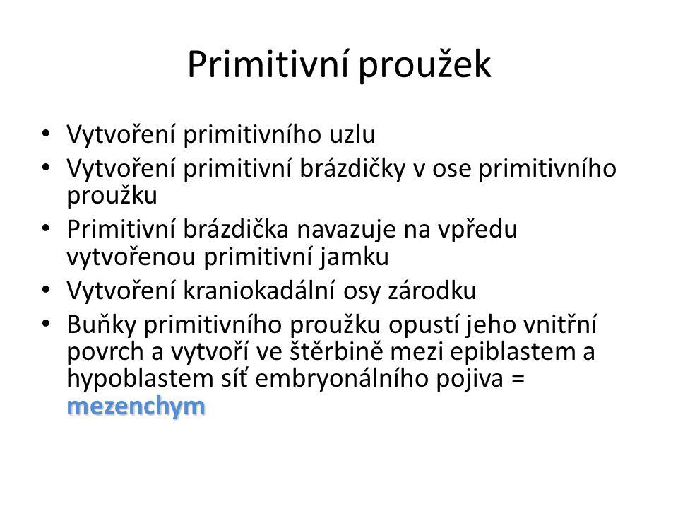 Primitivní proužek Vytvoření primitivního uzlu