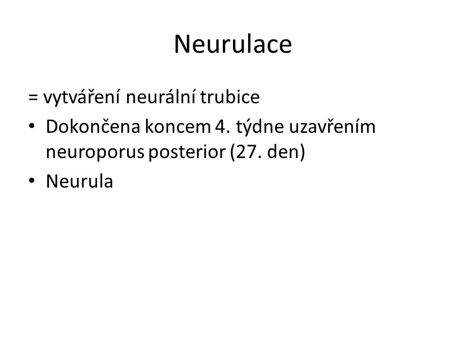 Neurulace = vytváření neurální trubice