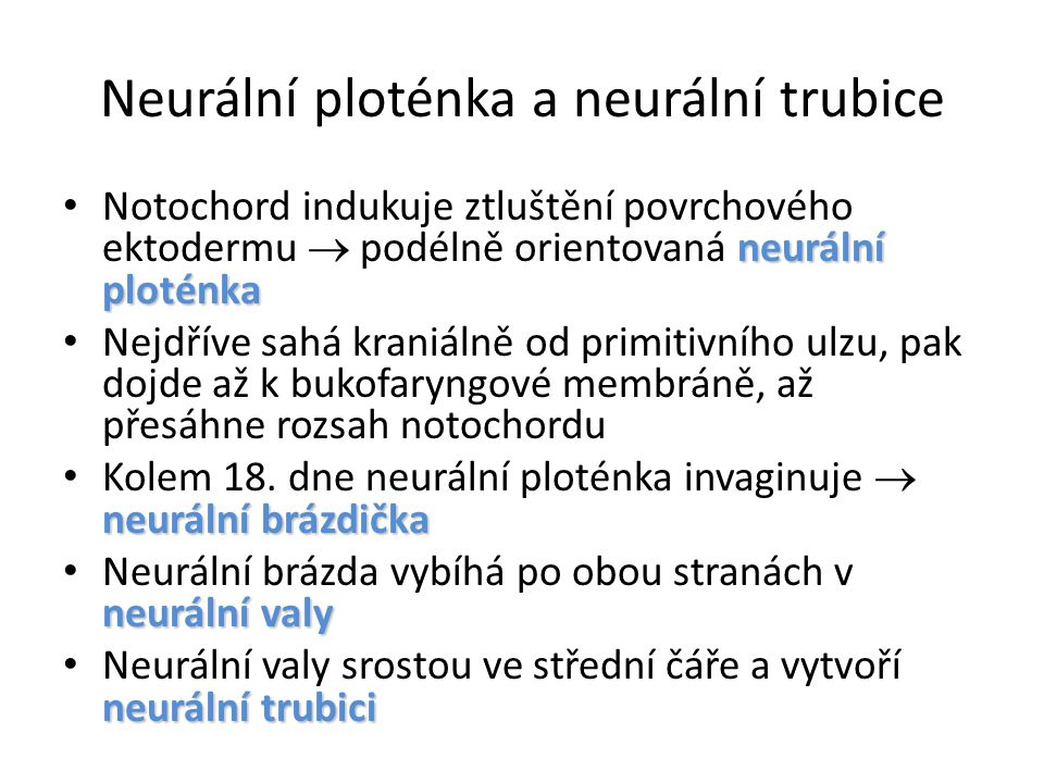 Neurální ploténka a neurální trubice