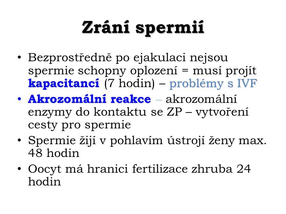 Zrání spermií Bezprostředně po ejakulaci nejsou spermie schopny oplození = musí projít kapacitancí (7 hodin) – problémy s IVF.