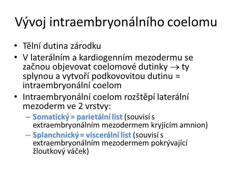 Vývoj intraembryonálního coelomu