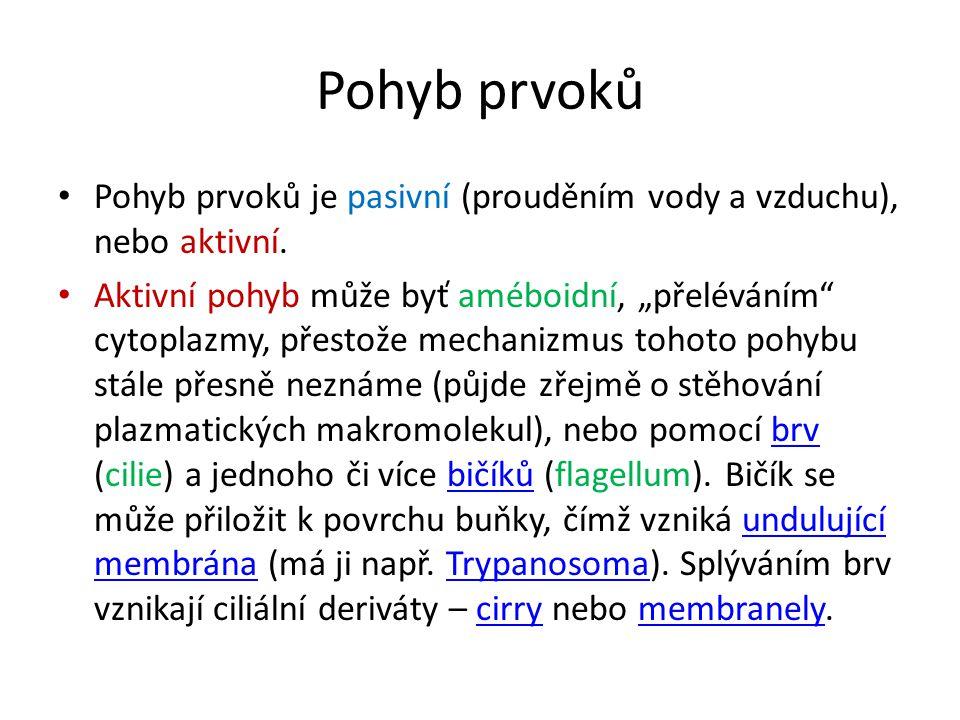 Pohyb prvoků Pohyb prvoků je pasivní (prouděním vody a vzduchu), nebo aktivní.