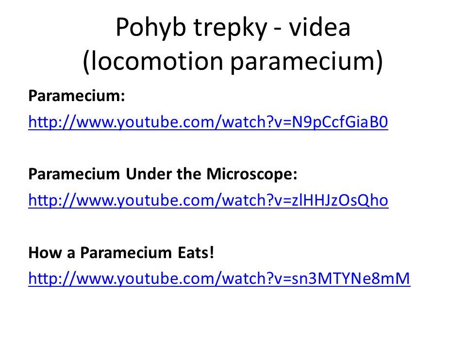 Pohyb trepky - videa (locomotion paramecium)