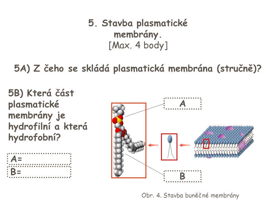 5. Stavba plasmatické membrány.