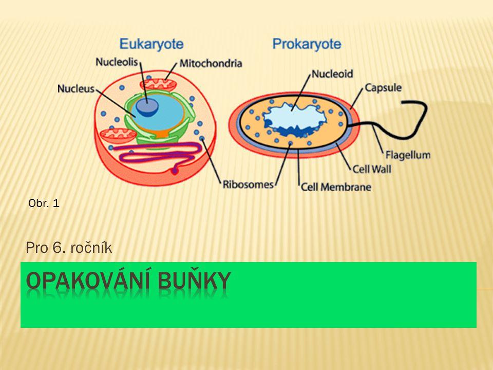 Obr. 1 Pro 6. ročník Opakování buňky