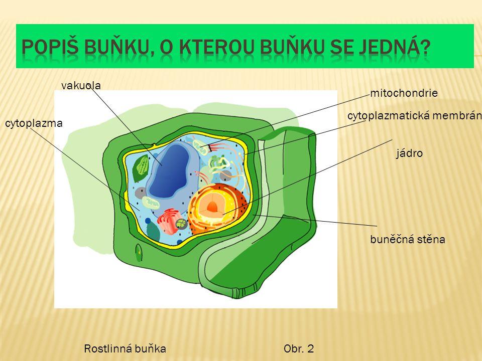 Popiš buňku, o kterou buňku se jedná