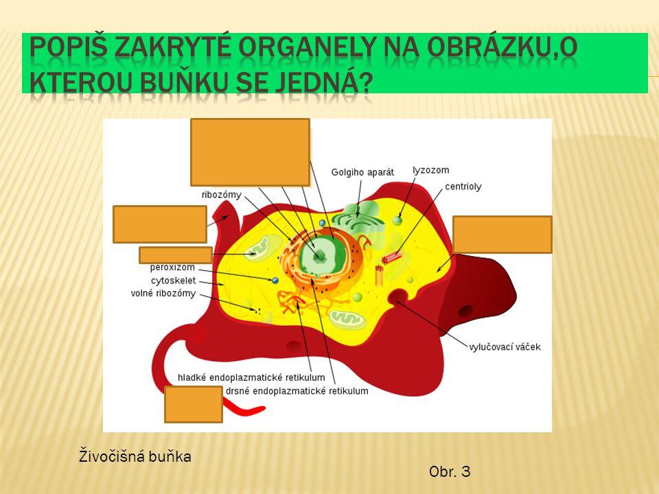 Popiš zakryté organely na obrázku,o kterou buňku se jedná