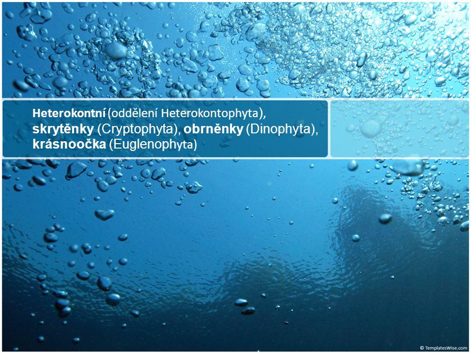 Heterokontní (oddělení Heterokontophyta), skrytěnky (Cryptophyta), obrněnky (Dinophyta), krásnoočka (Euglenophyta)