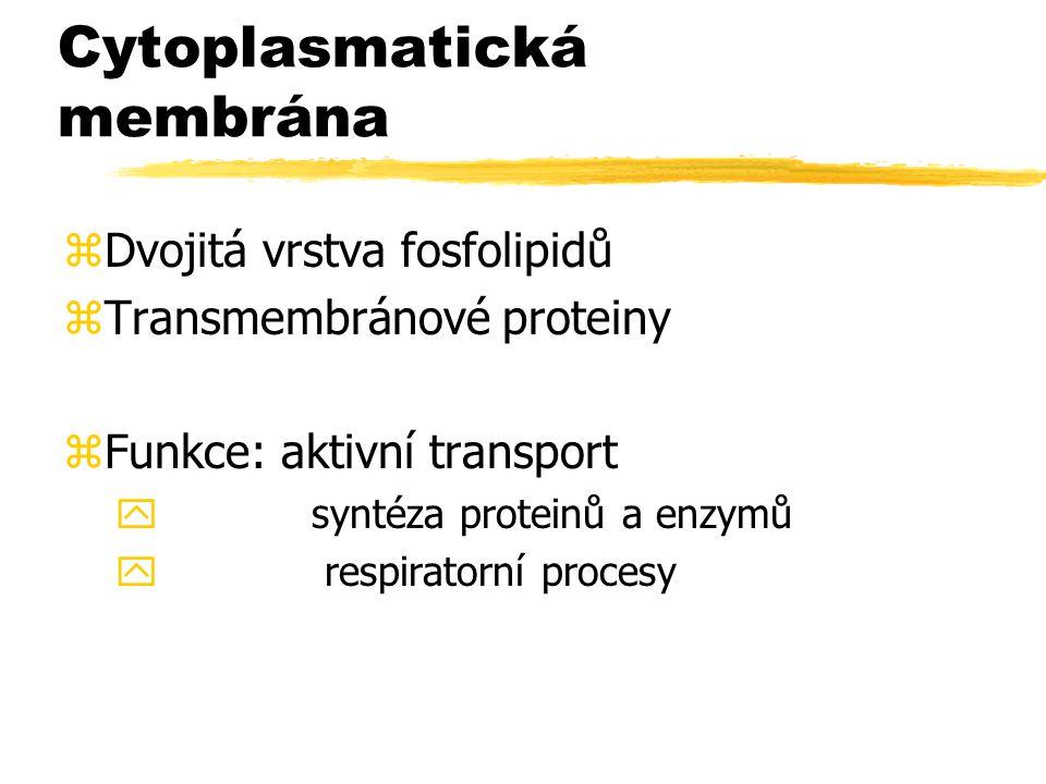 Cytoplasmatická membrána