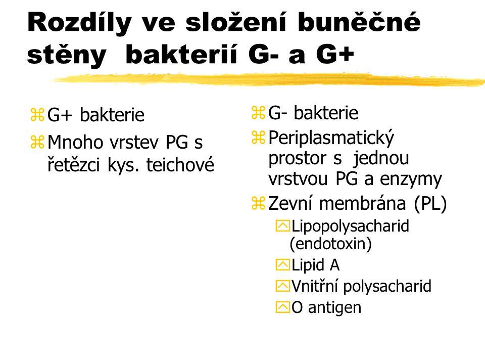 Rozdíly ve složení buněčné stěny bakterií G- a G+