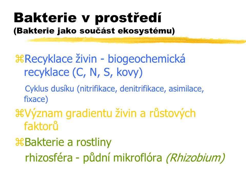 Bakterie v prostředí (Bakterie jako součást ekosystému)