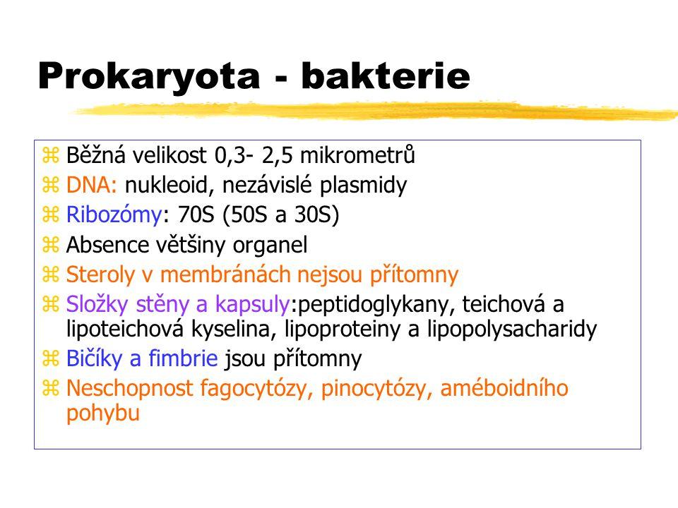 Prokaryota - bakterie Běžná velikost 0,3- 2,5 mikrometrů