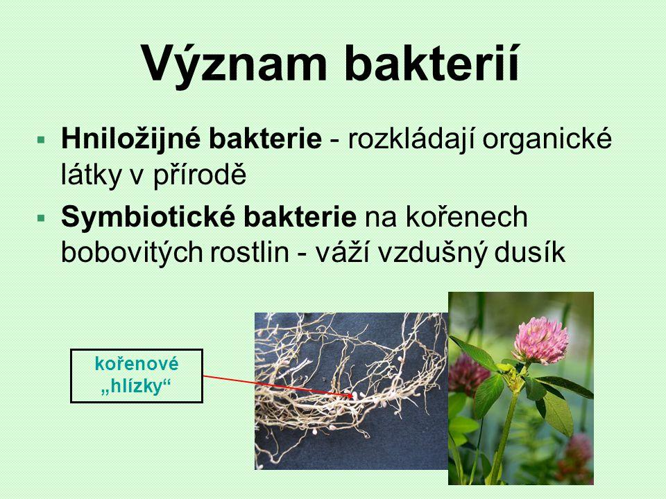 Význam bakterií Hniložijné bakterie - rozkládají organické látky v přírodě. Symbiotické bakterie na kořenech bobovitých rostlin - váží vzdušný dusík.