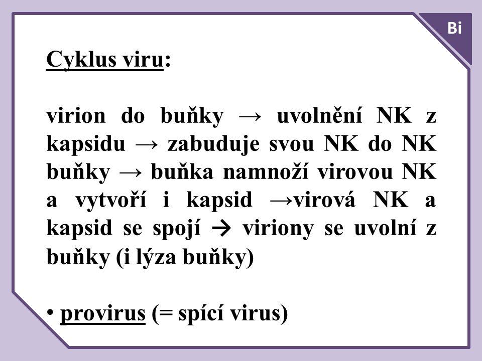 provirus (= spící virus)